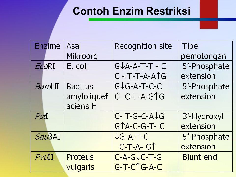 4.Sekuen pengenal 4, 6, 8 pasang basa 5.Sifatnya palindromik: jika ditarik garis sumbu ditengah sekuen pengenal akan terlihat urutan basa yg simetris 6.Memotong ikatan fosfodiester, shg hasilkan satu ujung punya gugus fosfat dan ujung lainnya gugus OH 7.Hasil potongan sticky end dan blunt end Enzim Restriksi/endonuklease