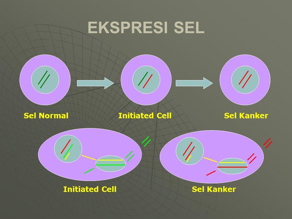 EKSPRESI SEL Sel NormalSel KankerInitiated Cell Sel Kanker