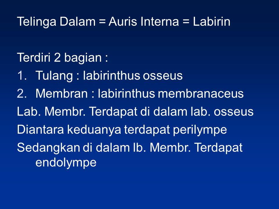 Telinga Dalam = Auris Interna = Labirin Terdiri 2 bagian : 1.Tulang : labirinthus osseus 2.Membran : labirinthus membranaceus Lab.