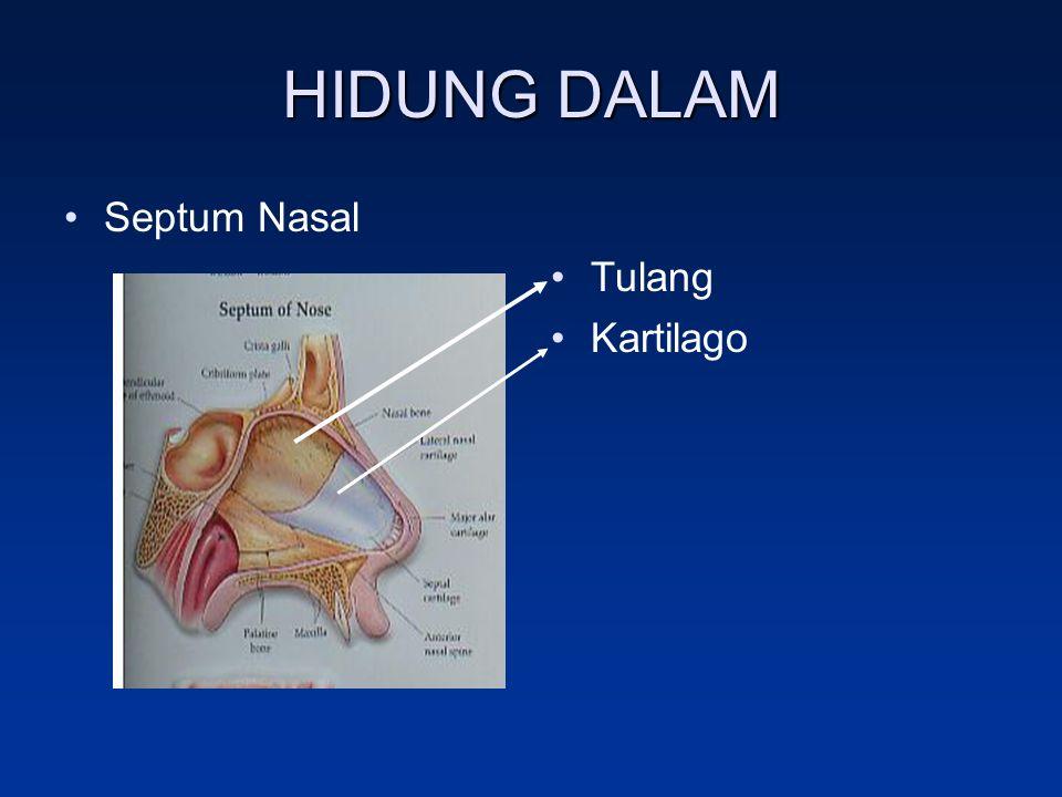 HIDUNG DALAM Septum Nasal Tulang Kartilago