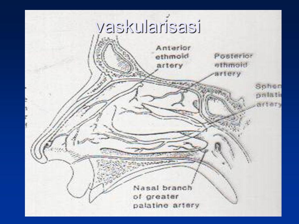 vaskularisasi
