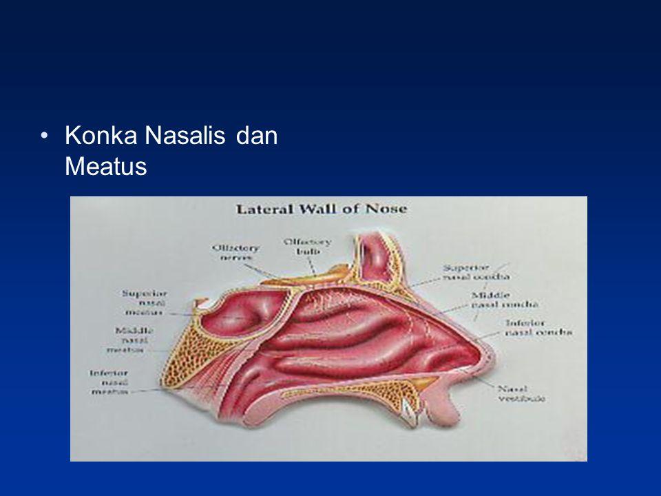 Konka Nasalis dan Meatus