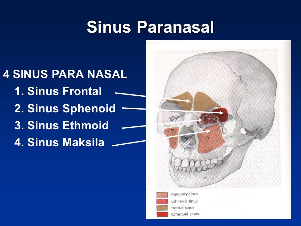 Sinus Paranasal 4 SINUS PARA NASAL 1. Sinus Frontal 2. Sinus Sphenoid 3. Sinus Ethmoid 4. Sinus Maksila