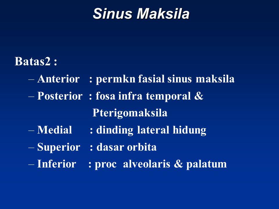 Sinus Maksila Batas2 : –Anterior : permkn fasial sinus maksila –Posterior : fosa infra temporal & Pterigomaksila –Medial : dinding lateral hidung –Superior : dasar orbita –Inferior : proc alveolaris & palatum