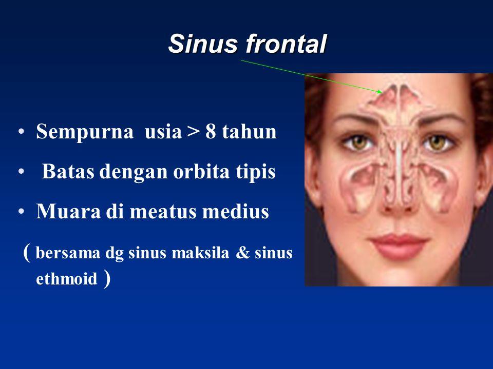Sinus frontal Sempurna usia > 8 tahun Batas dengan orbita tipis Muara di meatus medius ( bersama dg sinus maksila & sinus ethmoid )