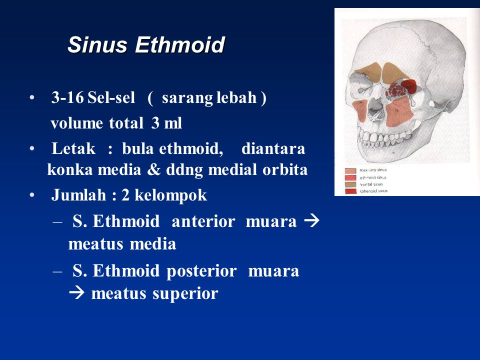 Sinus Ethmoid Sinus Ethmoid 3-16 Sel-sel ( sarang lebah ) volume total 3 ml Letak : bula ethmoid, diantara konka media & ddng medial orbita Jumlah : 2
