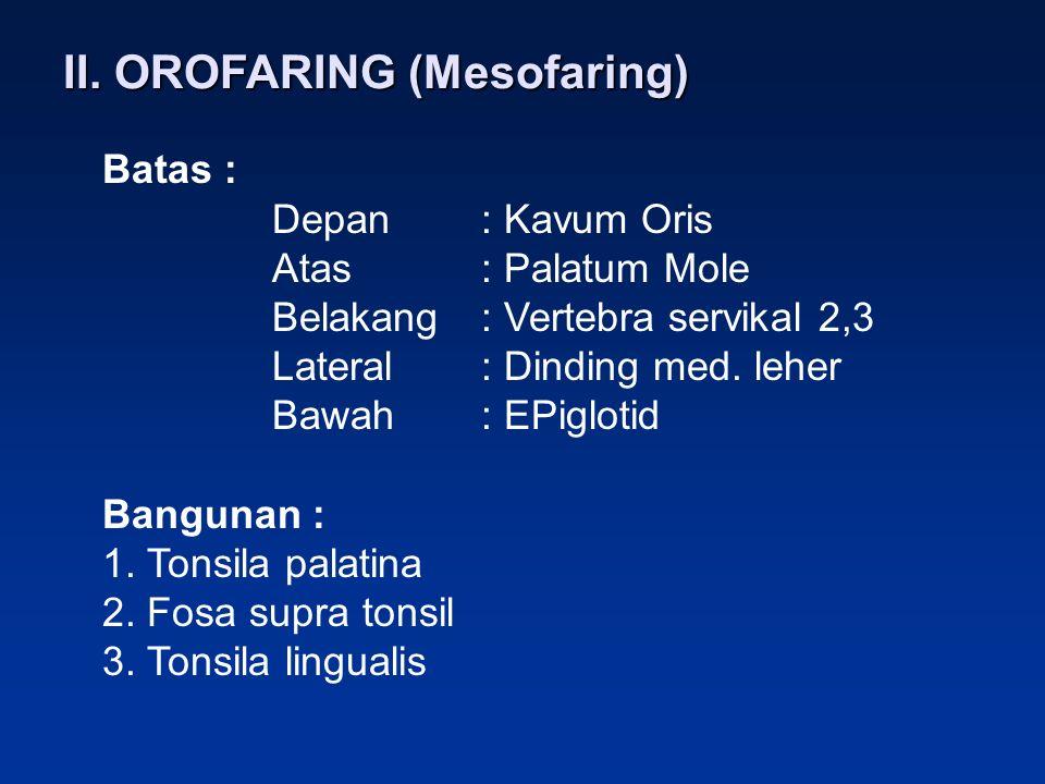 II. OROFARING (Mesofaring) Batas : Depan: Kavum Oris Atas: Palatum Mole Belakang: Vertebra servikal 2,3 Lateral: Dinding med. leher Bawah: EPiglotid B