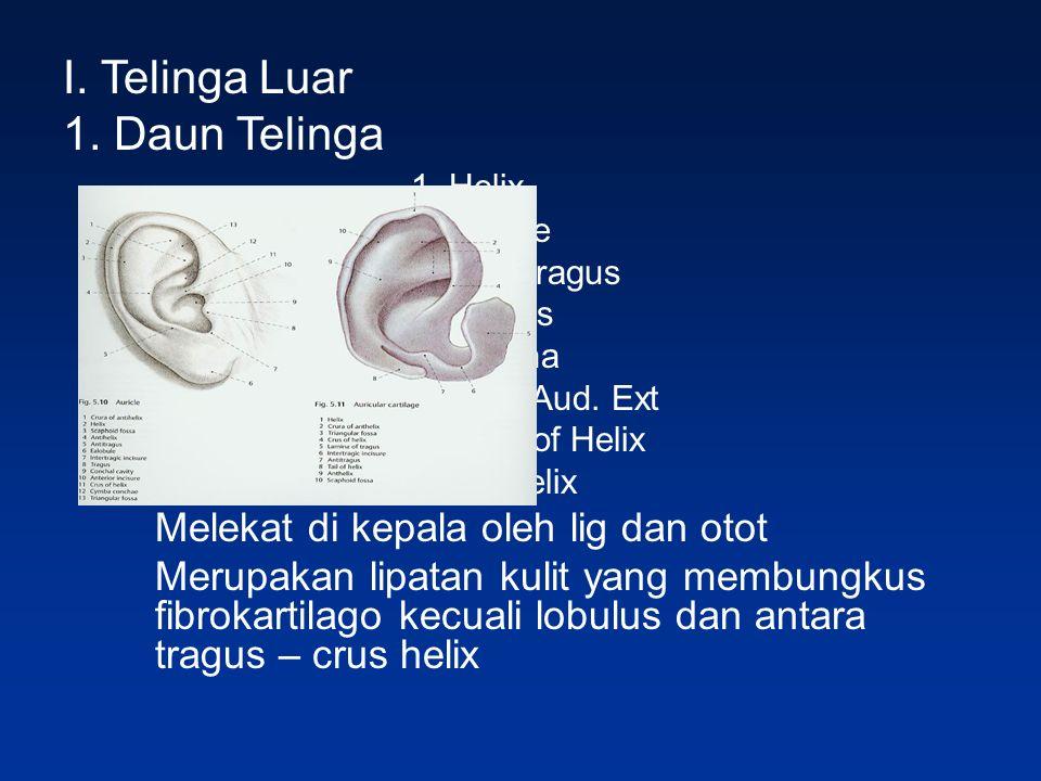 I. Telinga Luar 1. Daun Telinga 1. Helix 2. Lobule 3. Anti Tragus 4. Tragus 5. concha 6. Can. Aud. Ext 7. Crus of Helix 8. Antihelix Melekat di kepala