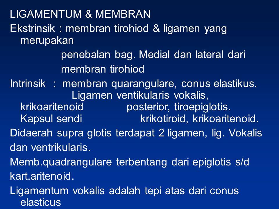 LIGAMENTUM & MEMBRAN Ekstrinsik : membran tirohiod & ligamen yang merupakan penebalan bag. Medial dan lateral dari membran tirohiod Intrinsik : membra