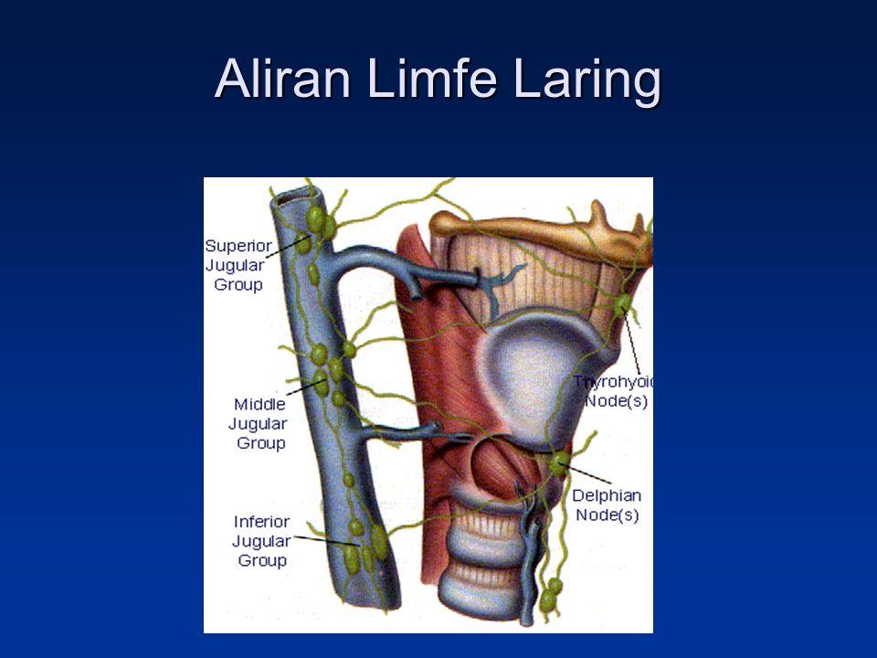 Aliran Limfe Laring