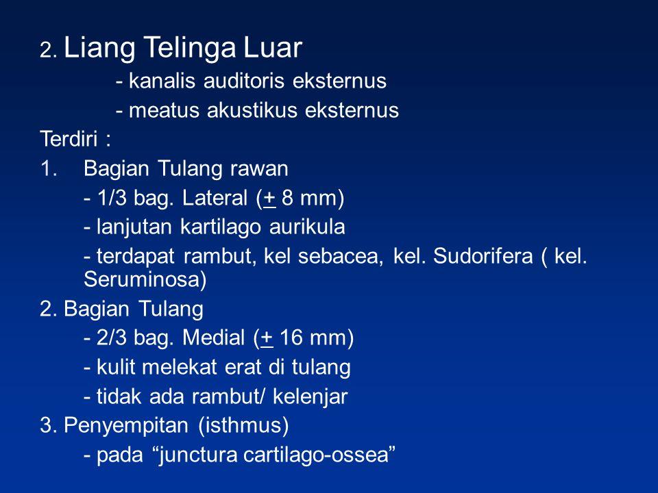 2. Liang Telinga Luar - kanalis auditoris eksternus - meatus akustikus eksternus Terdiri : 1.Bagian Tulang rawan - 1/3 bag. Lateral (+ 8 mm) - lanjuta