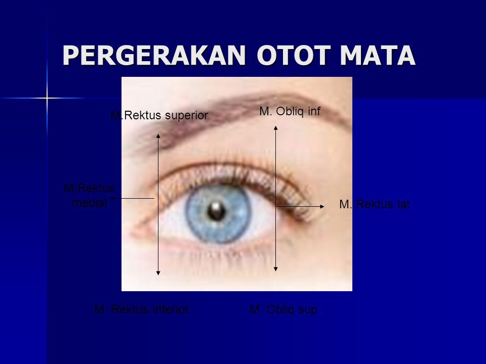 PERGERAKAN OTOT MATA M.Rektus medial M.Rektus superior M. Rektus inferior M. Obliq inf M. Obliq sup M. Rektus lat