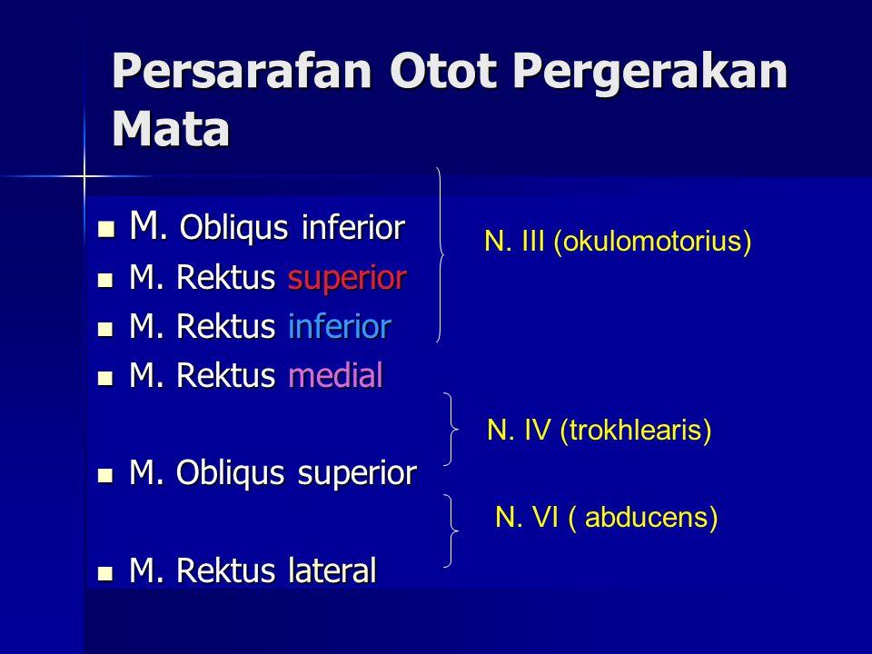 Persarafan Otot Pergerakan Mata M. Obliqus inferior M. Obliqus inferior M. Rektus superior M. Rektus superior M. Rektus inferior M. Rektus inferior M.