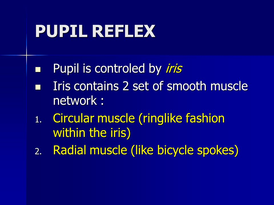 PUPIL REFLEX Pupil is controled by iris Pupil is controled by iris Iris contains 2 set of smooth muscle network : Iris contains 2 set of smooth muscle