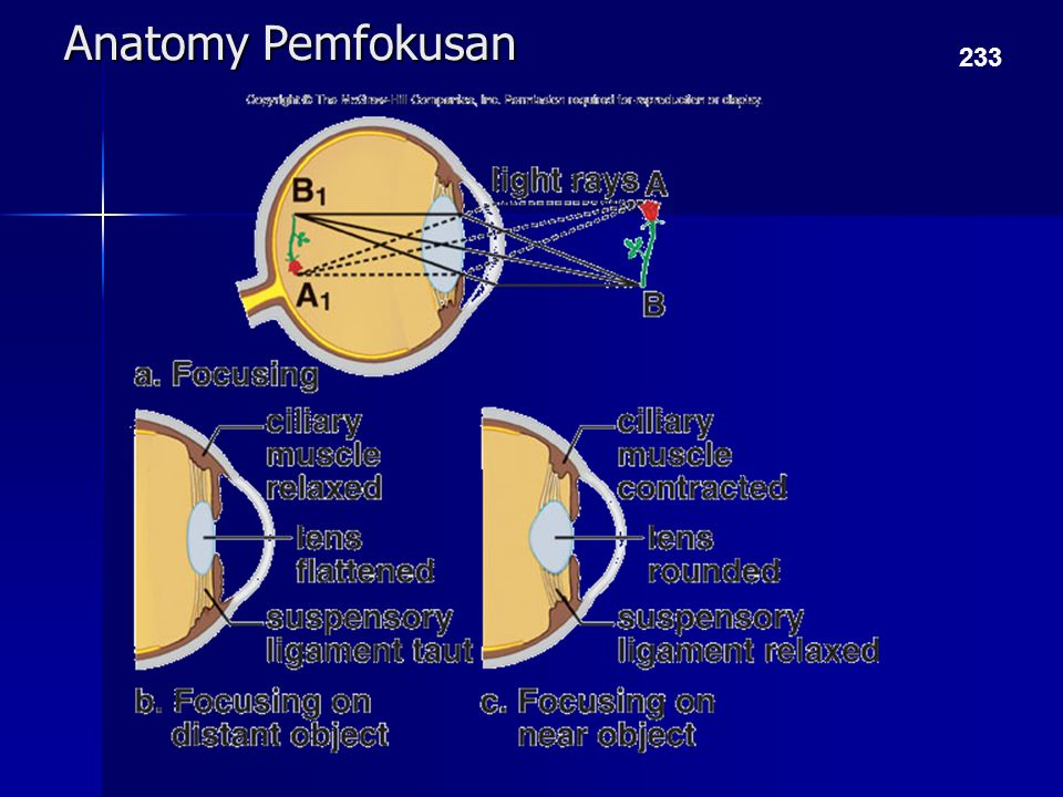 Anatomy Pemfokusan 233
