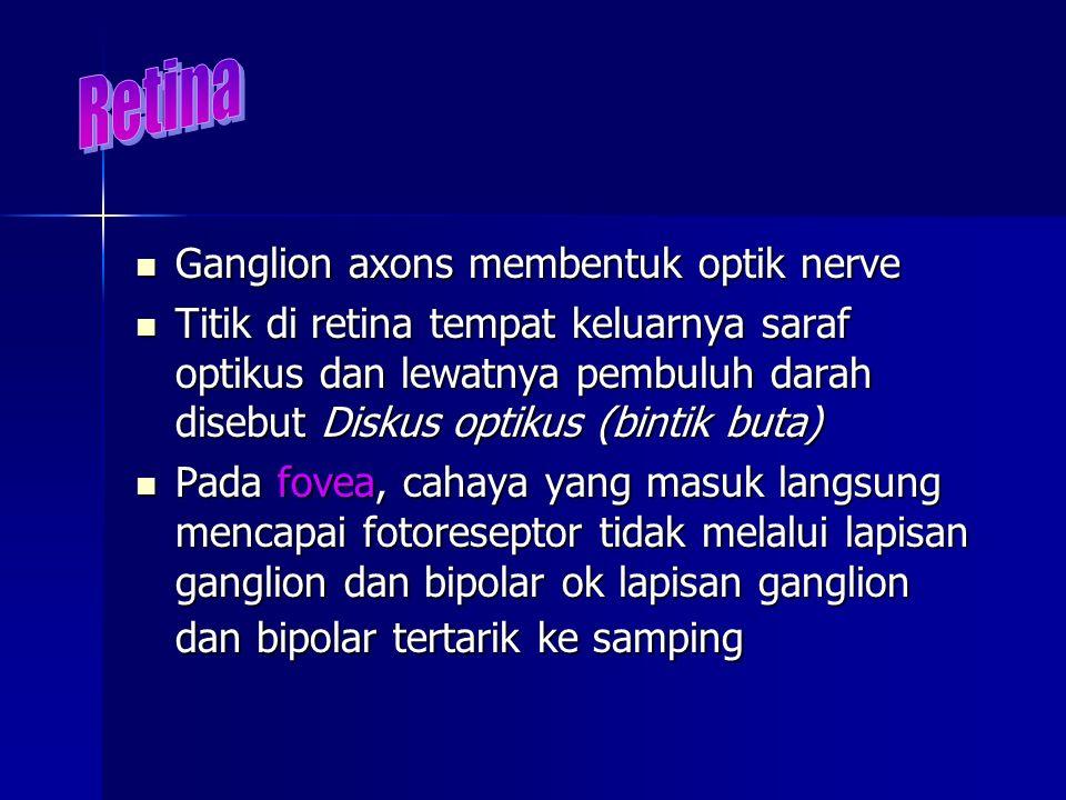 Ganglion axons membentuk optik nerve Ganglion axons membentuk optik nerve Titik di retina tempat keluarnya saraf optikus dan lewatnya pembuluh darah d