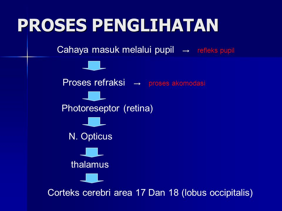 Persarafan Otot Pergerakan Mata M.Obliqus inferior M.