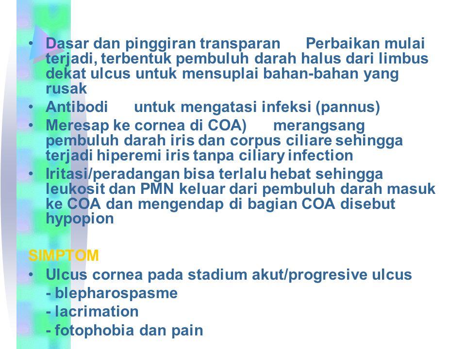 Dasar dan pinggiran transparan Perbaikan mulai terjadi, terbentuk pembuluh darah halus dari limbus dekat ulcus untuk mensuplai bahan-bahan yang rusak Antibodi untuk mengatasi infeksi (pannus) Meresap ke cornea di COA) merangsang pembuluh darah iris dan corpus ciliare sehingga terjadi hiperemi iris tanpa ciliary infection Iritasi/peradangan bisa terlalu hebat sehingga leukosit dan PMN keluar dari pembuluh darah masuk ke COA dan mengendap di bagian COA disebut hypopion SIMPTOM Ulcus cornea pada stadium akut/progresive ulcus - blepharospasme - lacrimation - fotophobia dan pain