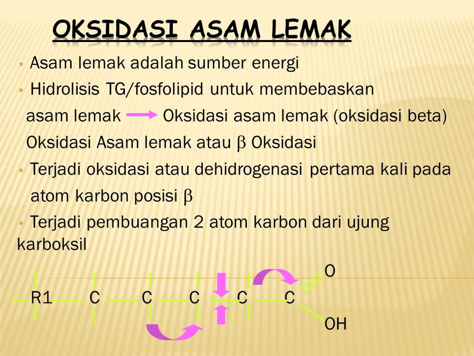 Asam lemak adalah sumber energi Hidrolisis TG/fosfolipid untuk membebaskan asam lemak Oksidasi asam lemak (oksidasi beta) Oksidasi Asam lemak atau  Oksidasi Terjadi oksidasi atau dehidrogenasi pertama kali pada atom karbon posisi  Terjadi pembuangan 2 atom karbon dari ujung karboksil O R1 C C C C C OH