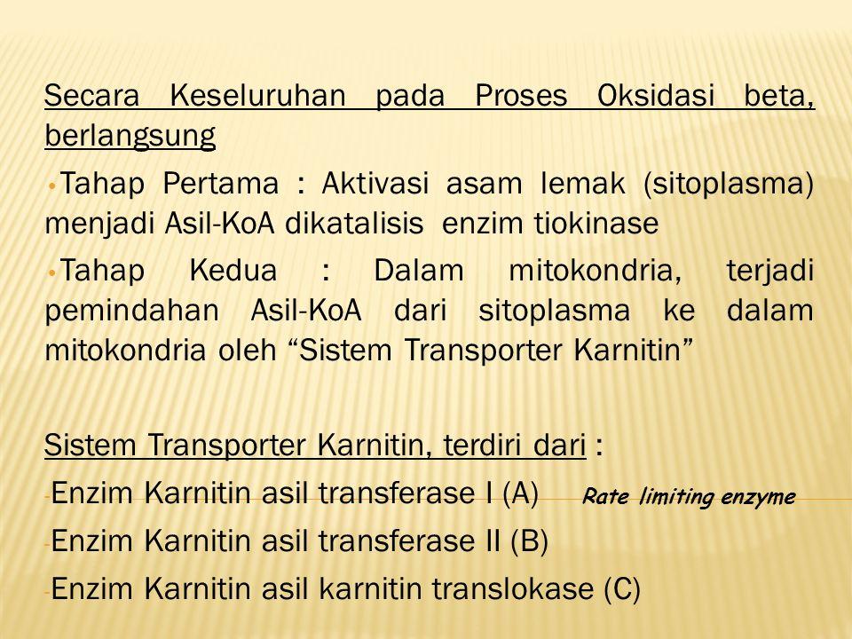 Secara Keseluruhan pada Proses Oksidasi beta, berlangsung Tahap Pertama : Aktivasi asam lemak (sitoplasma) menjadi Asil-KoA dikatalisis enzim tiokinase Tahap Kedua : Dalam mitokondria, terjadi pemindahan Asil-KoA dari sitoplasma ke dalam mitokondria oleh Sistem Transporter Karnitin Sistem Transporter Karnitin, terdiri dari : - Enzim Karnitin asil transferase I (A) Rate limiting enzyme - Enzim Karnitin asil transferase II (B) - Enzim Karnitin asil karnitin translokase (C)