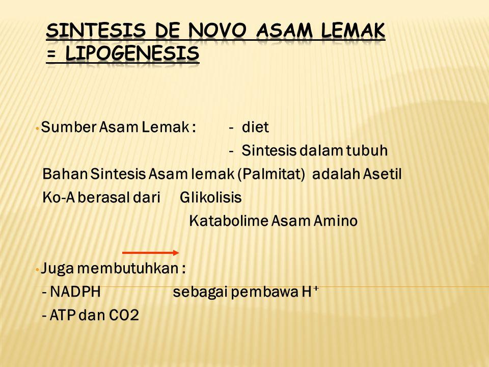 Sumber Asam Lemak :- diet - Sintesis dalam tubuh Bahan Sintesis Asam lemak (Palmitat) adalah Asetil Ko-A berasal dari Glikolisis Katabolime Asam Amino Juga membutuhkan : - NADPH sebagai pembawa H + - ATP dan CO2