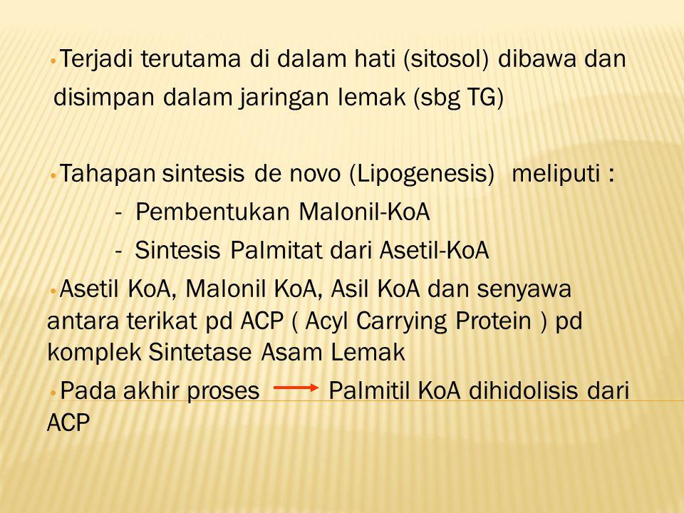 Terjadi terutama di dalam hati (sitosol) dibawa dan disimpan dalam jaringan lemak (sbg TG) Tahapan sintesis de novo (Lipogenesis) meliputi : - Pembentukan Malonil-KoA - Sintesis Palmitat dari Asetil-KoA Asetil KoA, Malonil KoA, Asil KoA dan senyawa antara terikat pd ACP ( Acyl Carrying Protein ) pd komplek Sintetase Asam Lemak Pada akhir proses Palmitil KoA dihidolisis dari ACP