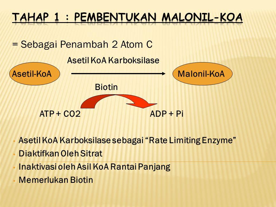 = Sebagai Penambah 2 Atom C Asetil KoA Karboksilase Asetil-KoAMalonil-KoA Biotin ATP + CO2ADP + Pi Asetil KoA Karboksilase sebagai Rate Limiting Enzyme Diaktifkan Oleh Sitrat Inaktivasi oleh Asil KoA Rantai Panjang Memerlukan Biotin