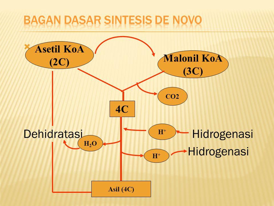  Dehidratasi Hidrogenasi Hidrogenasi Asetil KoA (2C) Malonil KoA (3C) 4C CO2 H+H+ H+H+ H2OH2O Asil (4C)