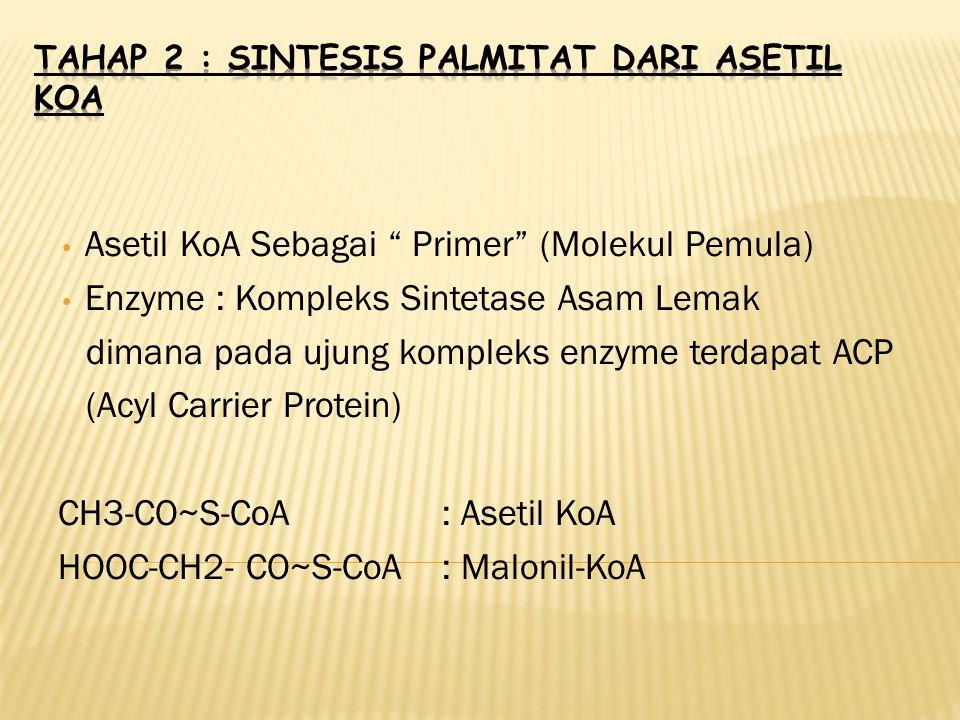 Asetil KoA Sebagai Primer (Molekul Pemula) Enzyme : Kompleks Sintetase Asam Lemak dimana pada ujung kompleks enzyme terdapat ACP (Acyl Carrier Protein) CH3-CO~S-CoA: Asetil KoA HOOC-CH2- CO~S-CoA: Malonil-KoA