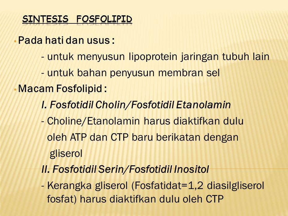 Pada hati dan usus : - untuk menyusun lipoprotein jaringan tubuh lain - untuk bahan penyusun membran sel Macam Fosfolipid : I. Fosfotidil Cholin/Fosfo