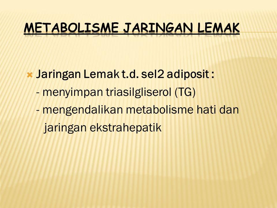  Jaringan Lemak t.d. sel2 adiposit : - menyimpan triasilgliserol (TG) - mengendalikan metabolisme hati dan jaringan ekstrahepatik