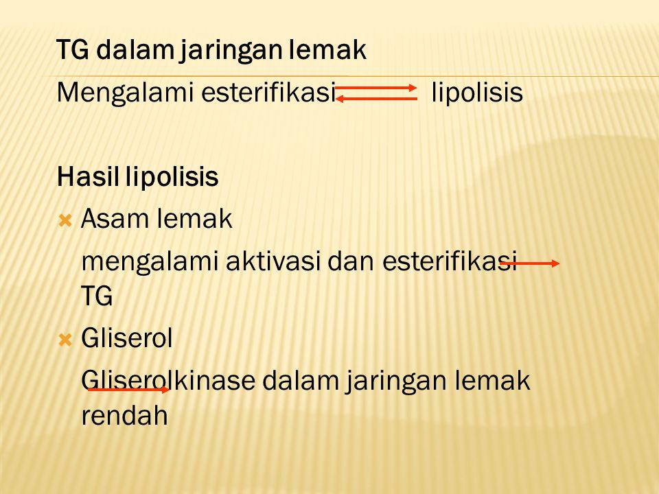 TG dalam jaringan lemak Mengalami esterifikasi lipolisis Hasil lipolisis  Asam lemak mengalami aktivasi dan esterifikasi TG  Gliserol Gliserolkinase