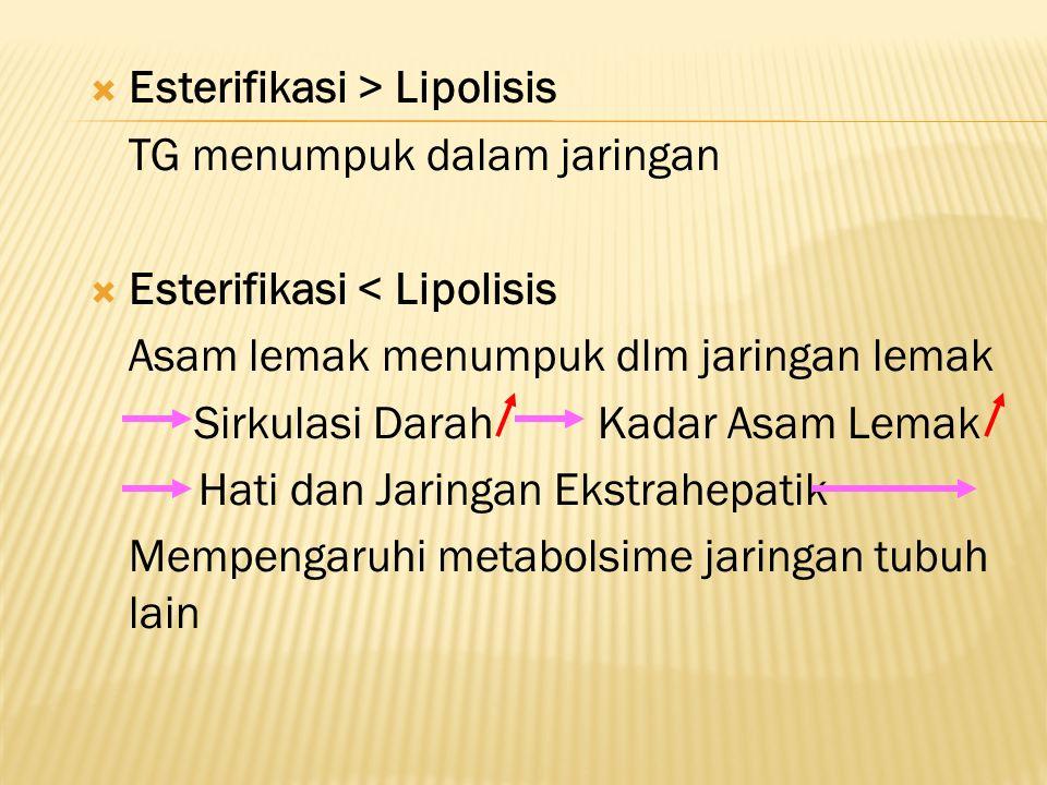  Esterifikasi > Lipolisis TG menumpuk dalam jaringan  Esterifikasi < Lipolisis Asam lemak menumpuk dlm jaringan lemak Sirkulasi Darah Kadar Asam Lemak Hati dan Jaringan Ekstrahepatik Mempengaruhi metabolsime jaringan tubuh lain