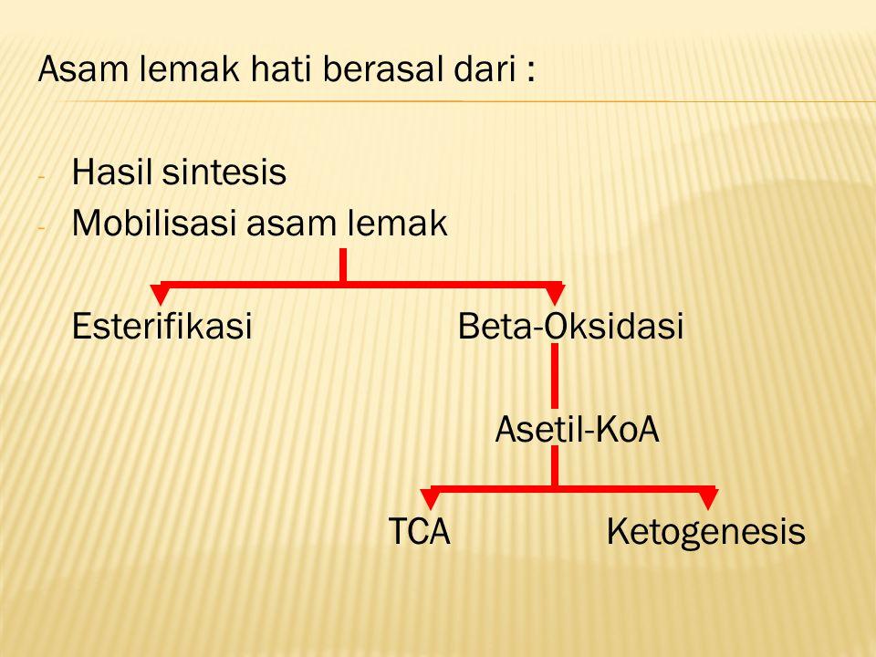 Asam lemak hati berasal dari : - Hasil sintesis - Mobilisasi asam lemak Esterifikasi Beta-Oksidasi Asetil-KoA TCA Ketogenesis