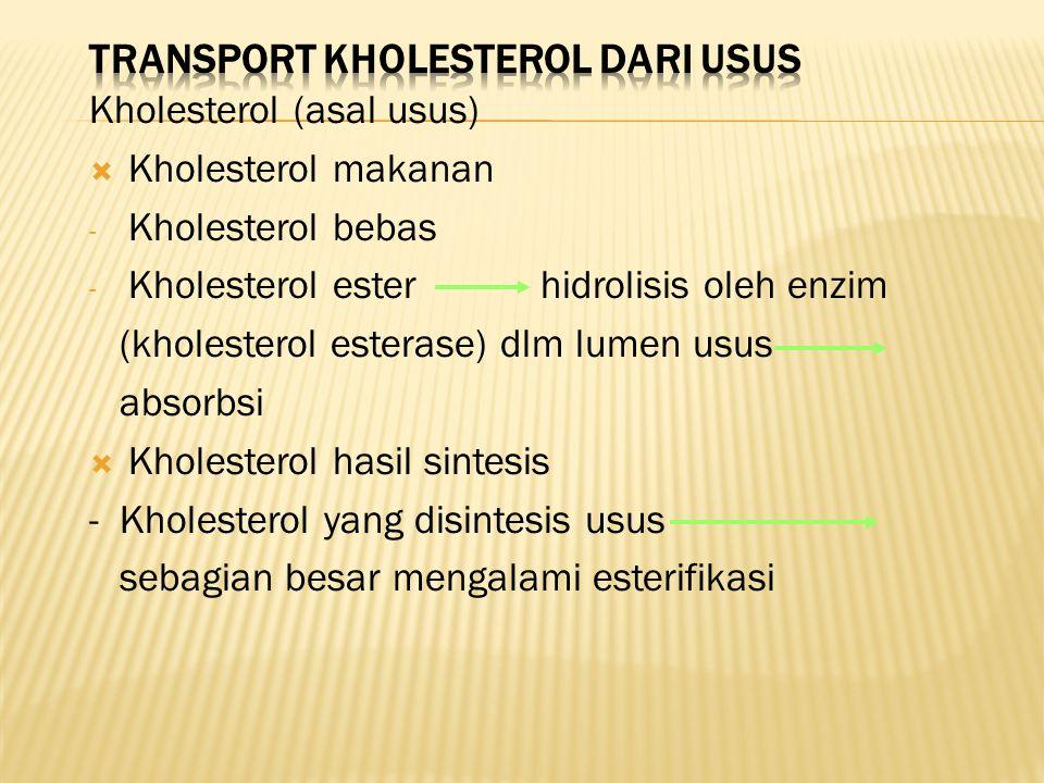 Kholesterol (asal usus)  Kholesterol makanan - Kholesterol bebas - Kholesterol ester hidrolisis oleh enzim (kholesterol esterase) dlm lumen usus absorbsi  Kholesterol hasil sintesis - Kholesterol yang disintesis usus sebagian besar mengalami esterifikasi