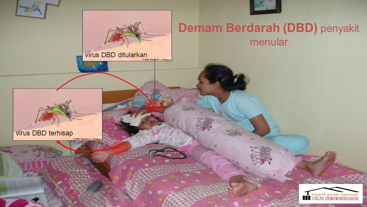 virus DBD terhisap virus DBD ditularkan Demam Berdarah (DBD) penyakit menular