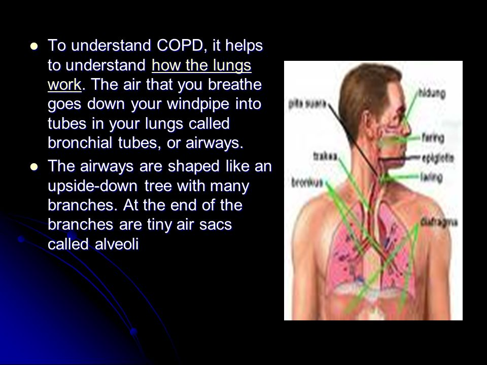 To understand COPD, it helps to understand how the lungs work.