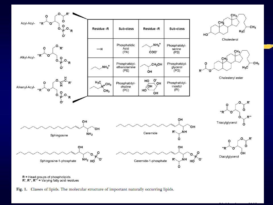 Pembentukan produk oksidasi primer