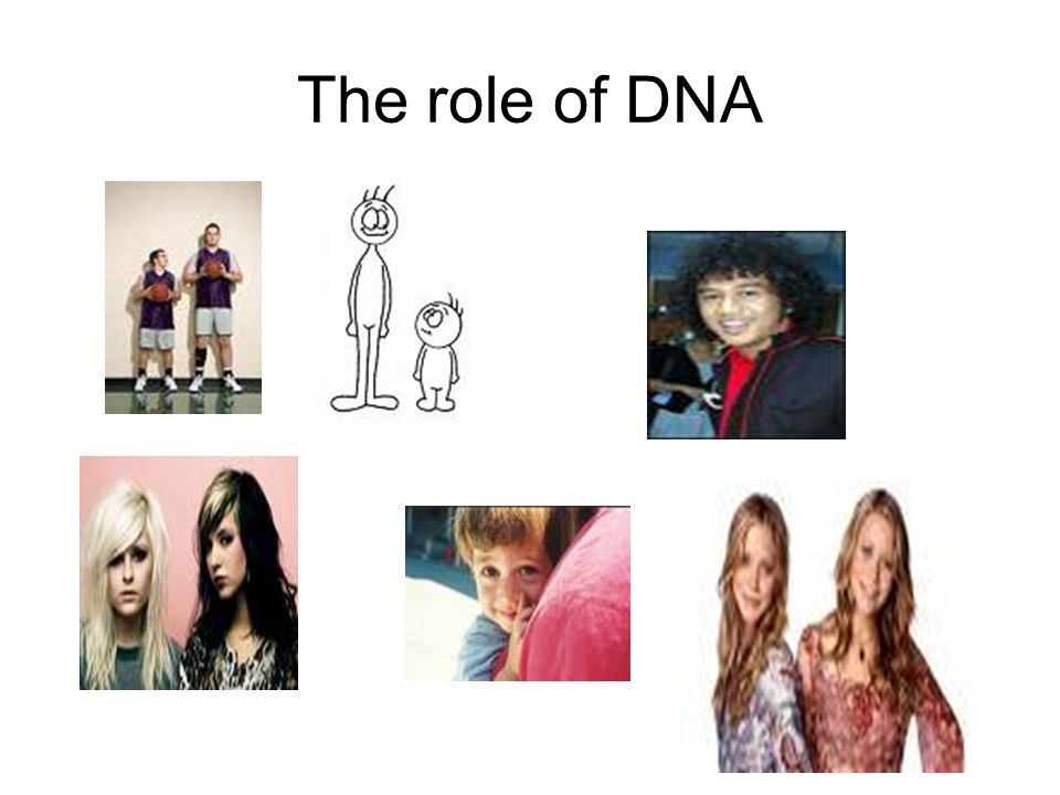 The role of DNA