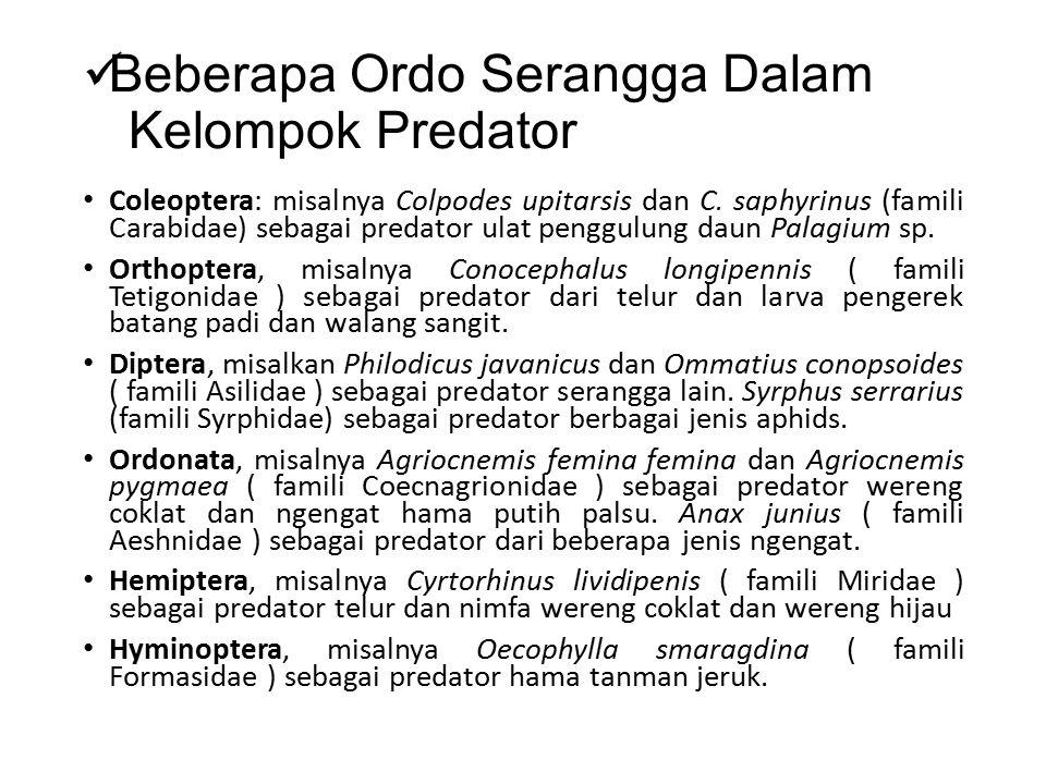 Beberapa Ordo Serangga Dalam Kelompok Predator Coleoptera: misalnya Colpodes upitarsis dan C. saphyrinus (famili Carabidae) sebagai predator ulat peng
