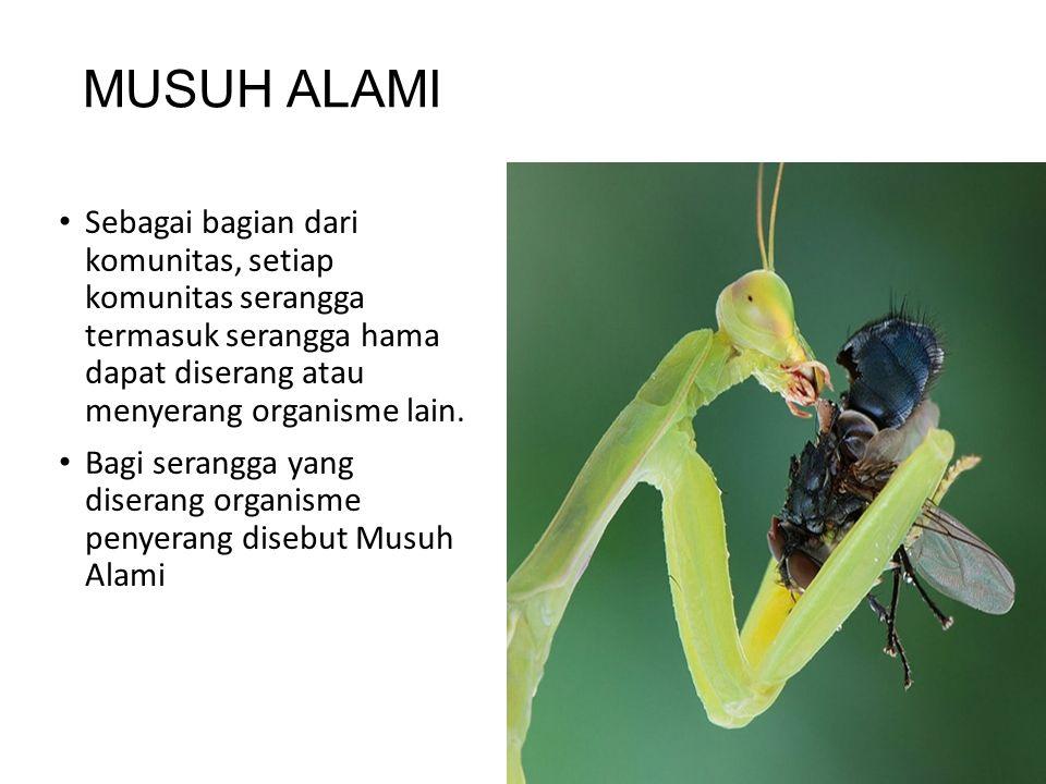 MUSUH ALAMI Sebagai bagian dari komunitas, setiap komunitas serangga termasuk serangga hama dapat diserang atau menyerang organisme lain. Bagi serangg