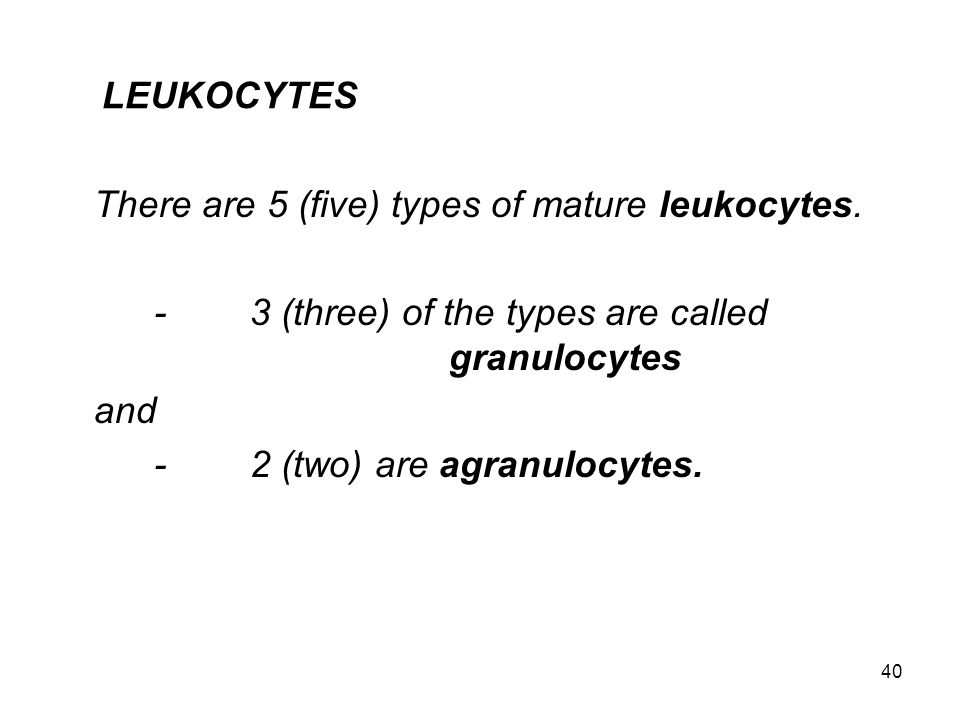 40 LEUKOCYTES There are 5 (five) types of mature leukocytes. -3 (three) of the types are called granulocytes and -2 (two) are agranulocytes.