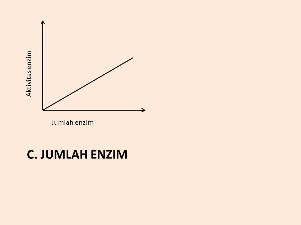 C. JUMLAH ENZIM Aktivitas enzim Jumlah enzim