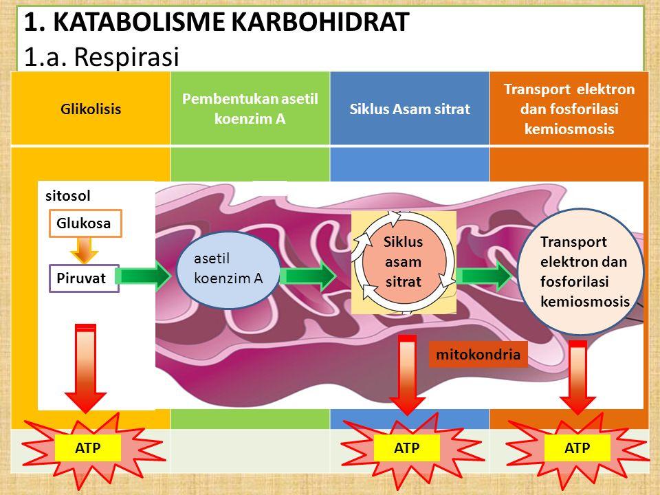1. KATABOLISME KARBOHIDRAT 1.a. Respirasi Glikolisis Pembentukan asetil koenzim A Siklus Asam sitrat Transport elektron dan fosforilasi kemiosmosis Gl