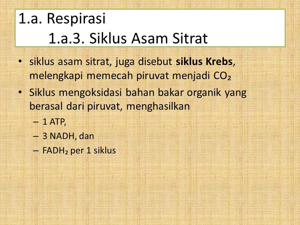 1.a. Respirasi 1.a.3. Siklus Asam Sitrat siklus asam sitrat, juga disebut siklus Krebs, melengkapi memecah piruvat menjadi CO₂ Siklus mengoksidasi bah