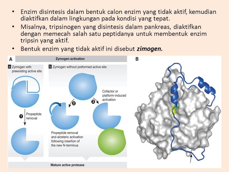 Enzim disintesis dalam bentuk calon enzim yang tidak aktif, kemudian diaktifkan dalam lingkungan pada kondisi yang tepat. Misalnya, tripsinogen yang d