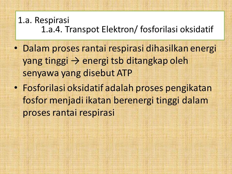Dalam proses rantai respirasi dihasilkan energi yang tinggi → energi tsb ditangkap oleh senyawa yang disebut ATP Fosforilasi oksidatif adalah proses p