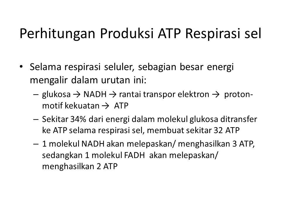 Perhitungan Produksi ATP Respirasi sel Selama respirasi seluler, sebagian besar energi mengalir dalam urutan ini: – glukosa → NADH → rantai transpor e