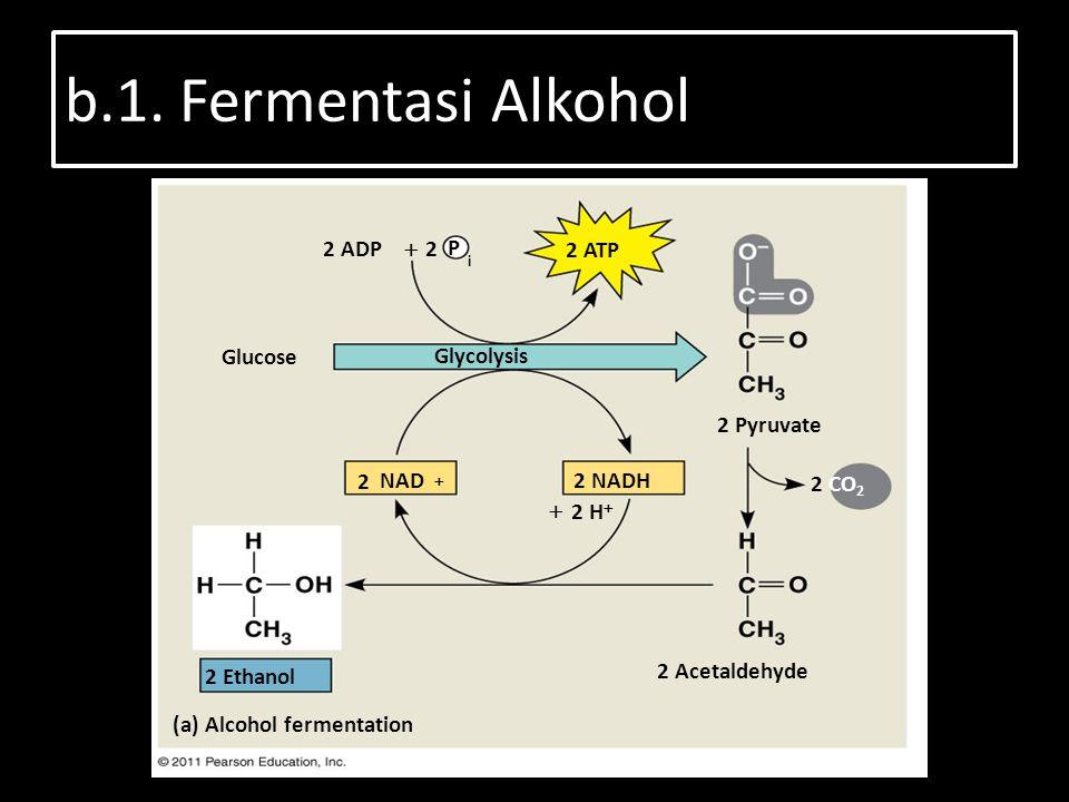 b.1. Fermentasi Alkohol Figure 9.17 (b) Lactic acid fermentation 2 Pyruvate 2 ADP 2 ATP Glucose Glycolysis 2 Pyruvate 2 CO 2 2  2 NADH 2 Ethanol 2 Ac