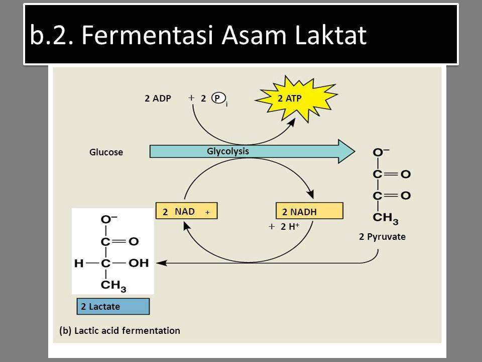 b.2. Fermentasi Asam Laktat (b) Lactic acid fermentation 2 Lactate 2 Pyruvate 2 NADH Glucose Glycolysis 2 ATP 2 ADP  2 P i 2 NAD   2 H 